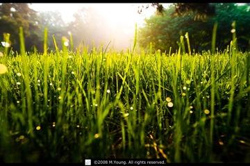 清晨的草坪