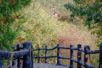 北宫国家森林公园(13)2019-10-25 a