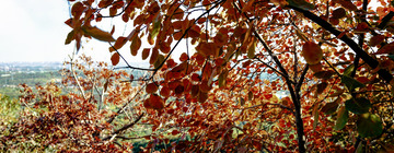 北宫国家森林公园(12)2019-10-25 b