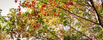 北宫国家森林公园(9)2019-10-25 b
