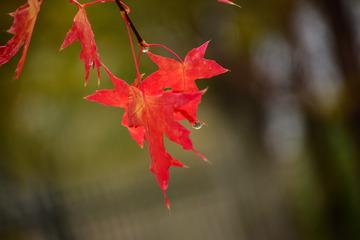 几时又见秋