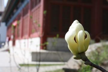 木莲花-2