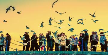 青岛傍晚的海鸥