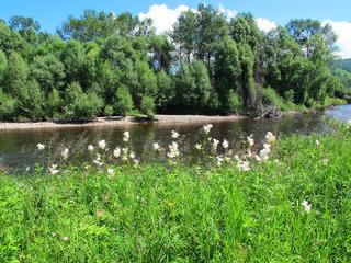 大兴安岭森林地理风光,清澈的河流,两岸的植被。