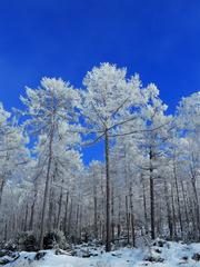 大兴安岭原始森林冬季雪景,森林雾凇、树挂冰霜。002