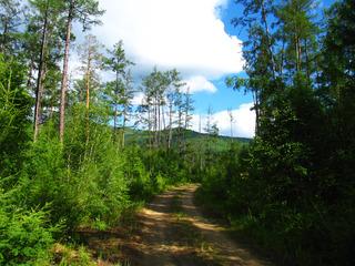 大兴安岭林区森林,林间小路。