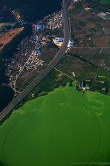 滇池 蓝藻