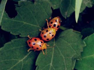 三个虫2.jpg