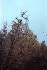 Scan-101209-001015_nEO_IMG