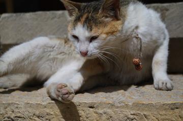 台阶上的猫