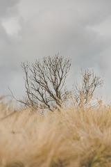 大洋路上一棵树