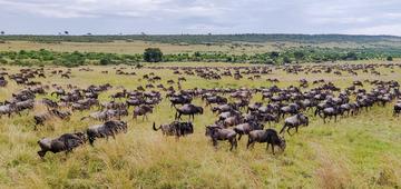 马赛马拉---动物大迁徙(肯尼亚)