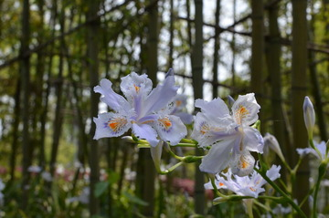 不知名的一种花