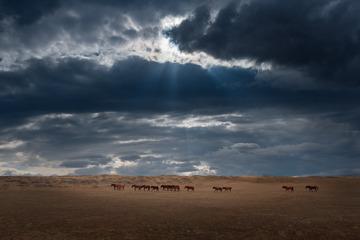 阿勒泰草原