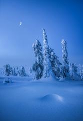怪树林月夜