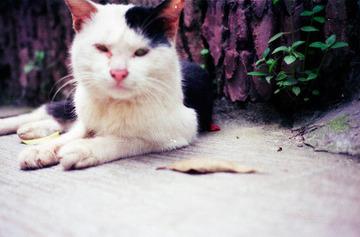 广州石牌村 石牌也是一个超多猫子的地方